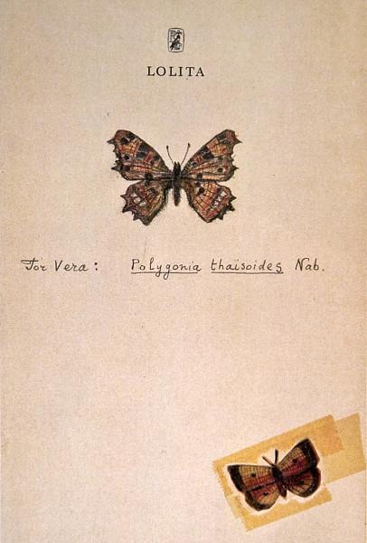 vlinder nabokov